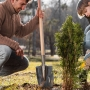 7 Tips for Watering Trees