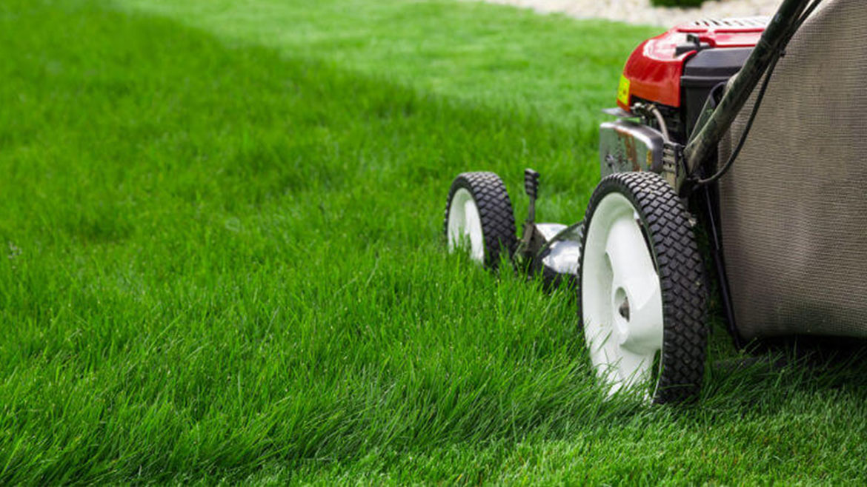 The Secrets to a Lush Lawn